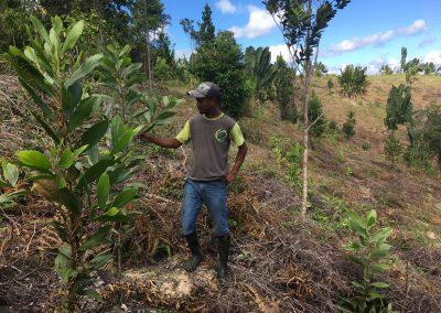 Plant d'accacia du projet de reboisement des zones dégradées